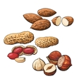 Collection of almond hazelnut and peanut heaps vector image