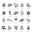 collection of herbs line icons vector image