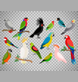 tropical parrot set on transparent background vector image vector image