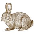 engraving rabbit vector image vector image
