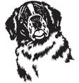 head of saint bernard black white vector image vector image