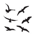 seagull set silhouettes on the white background vector image vector image