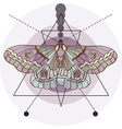 Hipster old fashion background with moth vector image