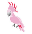 isolated cute pink bird vector image