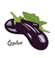 Vegetable eggplant vector image