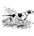 pointing breed vector image