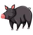 Gray pig vector image