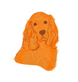 English cocker spaniel isolated on white vector image