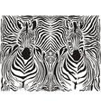 Zebra pattern background vector image