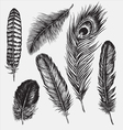 Set of Hand Drawn Feathers vector image