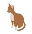 Cornish rex cat icon isometric 3d style vector image