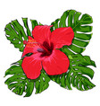 beautiful tropical flowers bouquet vector image