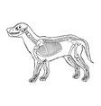Dog skeleton outline vector image