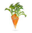 bunch of carrots bound by rope realistic vector image