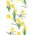 yellow crocus flowers vector image
