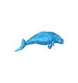 Dugong Drawing vector image