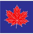 maple leaf on blue backdrop vector image