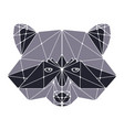 raccoon head polygonal vector image