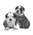 Puppy bulldogs 02 vector image