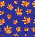 pattern with b bright maple leaves vector image