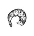 shrimp tail hand drawn isolated icon vector image
