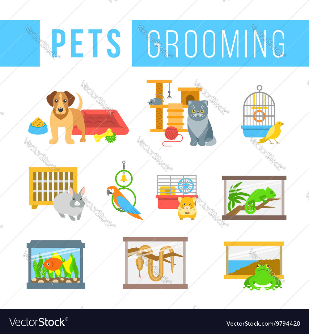 Animals pets grooming flat colorful vector