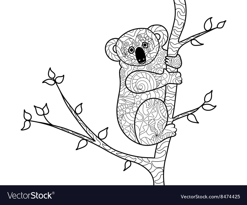 Koala bear coloring book for adults vector