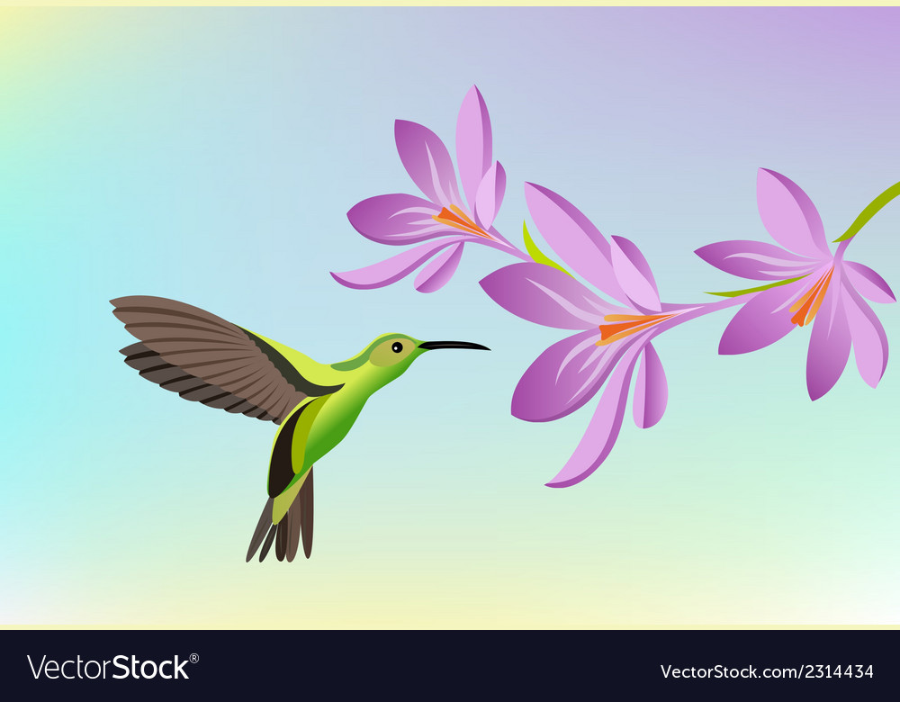 Greeting card with hummingbird vector