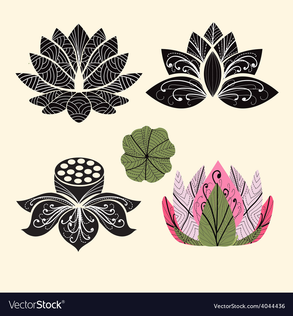 Flower lotus lotus flowers vector