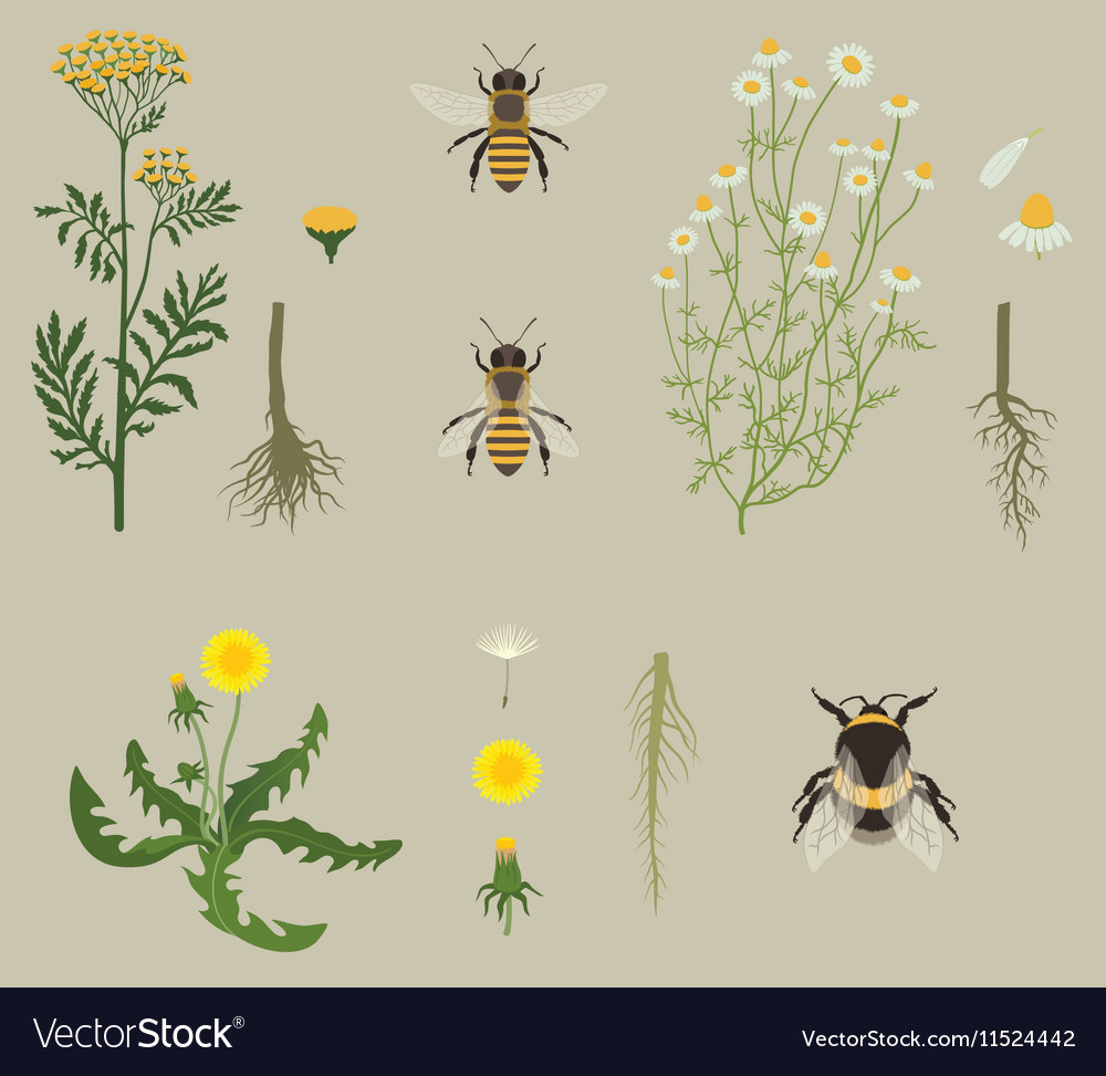 Pattern with bees and yellow flowers vector