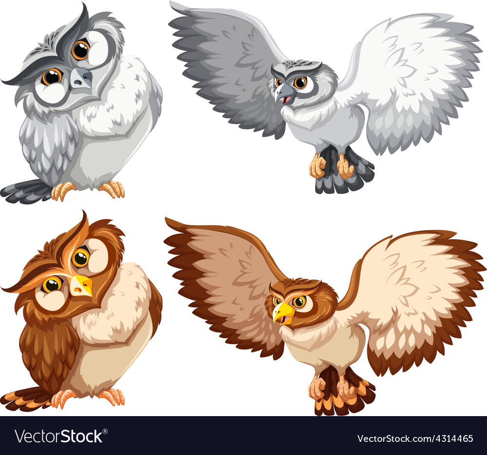 Four owls vector