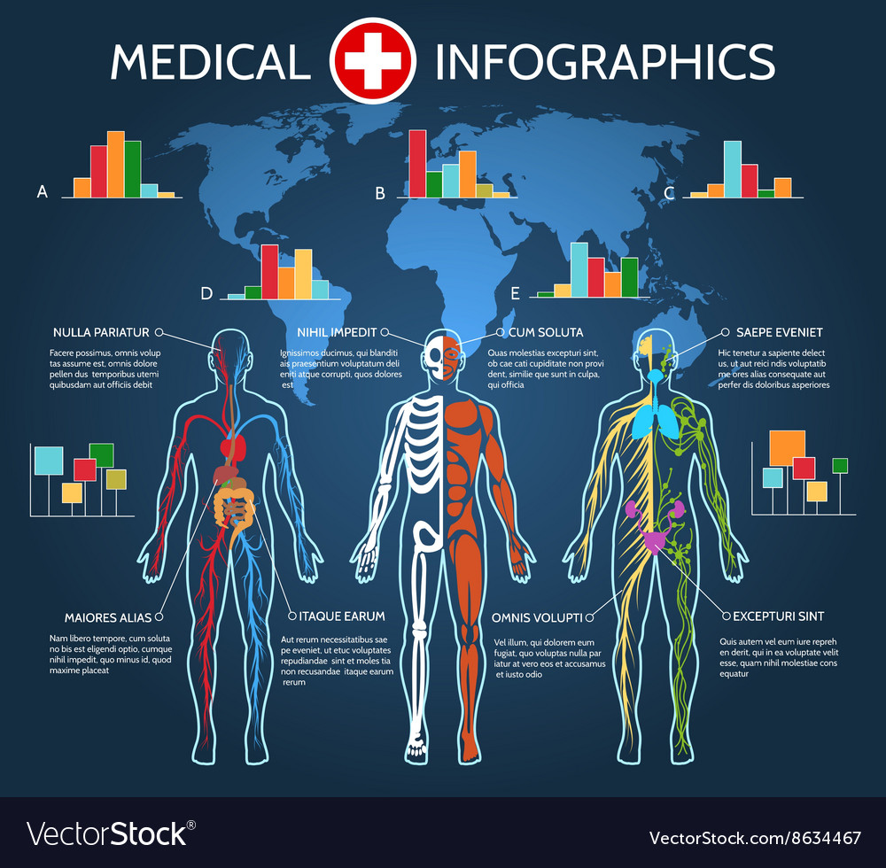 Human body anatomy infographic vector