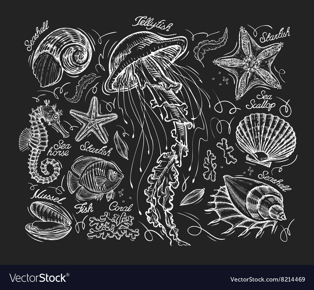 Hand drawn sketch jellyfish starfish scallop vector