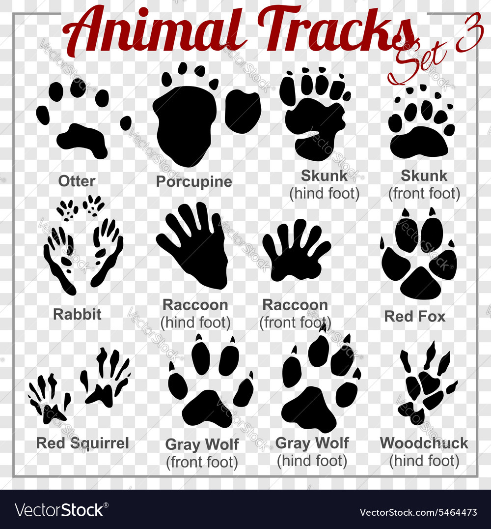 Animals tracks  set vector