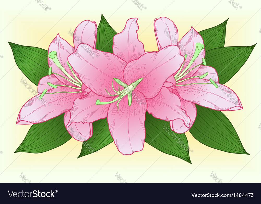 Bouquet of pink roses with green leaves vector