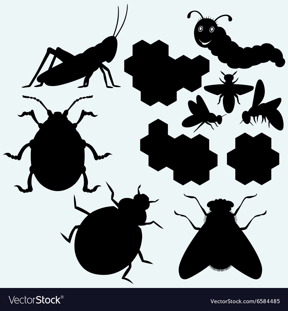 Species of insects vector