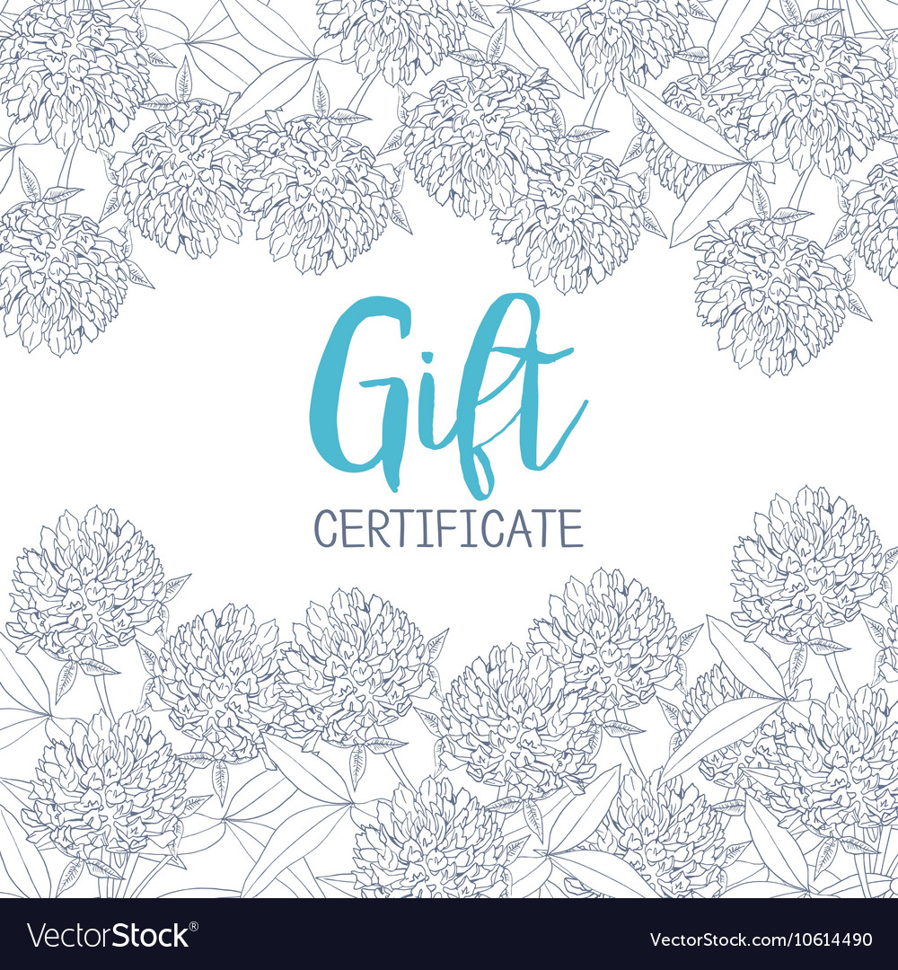 Clover flowers a template of the gift certificate vector
