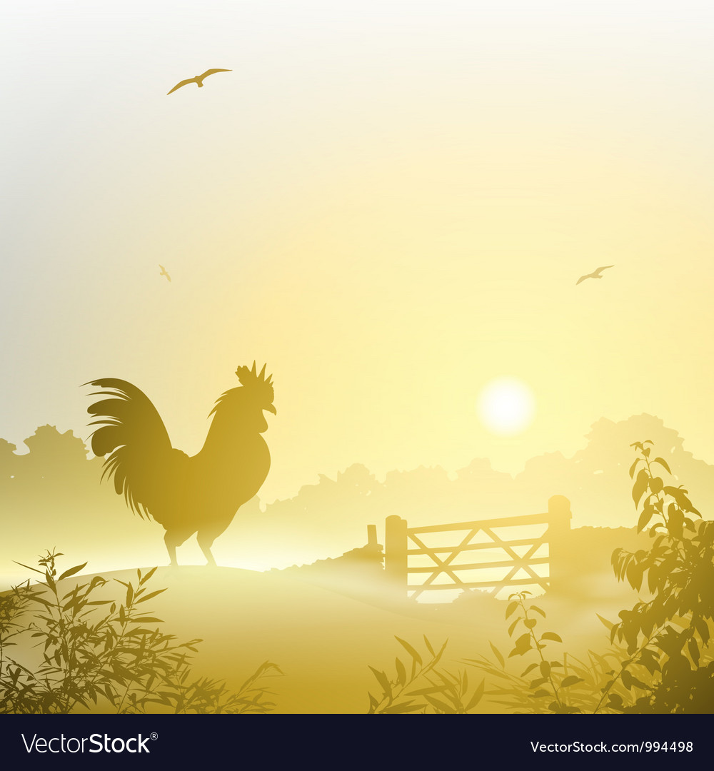 Cockerel rooster vector