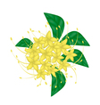 Bush Willow Flower or Combretum Erythrophyllum vector image
