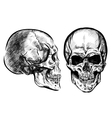 hand drawn anatomy skull with different tones and vector image