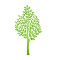 Green tree isolated on white for your design vector image