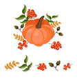 pumpkin decor autumn harvest vector image