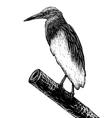 Pondheron sketch vector image