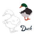 Educational game connect dots to draw duck bird vector image