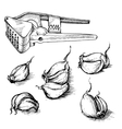 hand drawn set of garlic cloves with press vector image