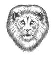 Hand Drawn Lion Head vector image