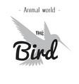 animal world the bird gray hummingbird background vector image