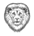 Hand Drawn Lion Head vector image