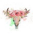 skull of a cow with horns poppy vector image