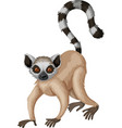 Meerkat with long tail vector image